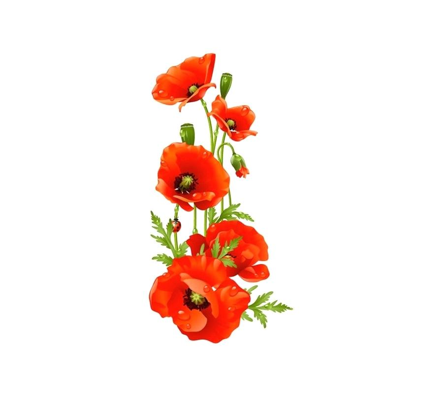 Poppy clipart poppy flower. Kmetijaselisnik net