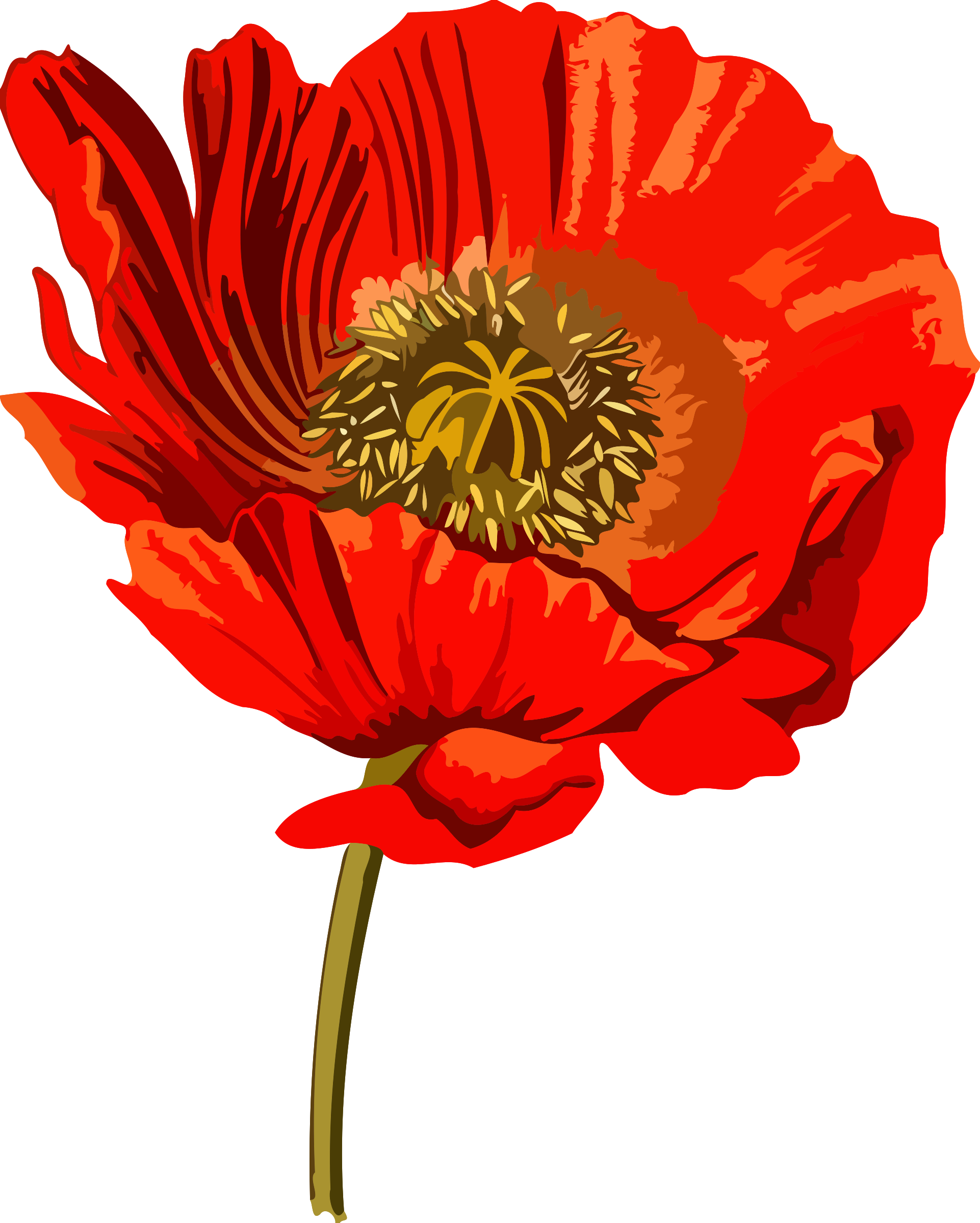 Opium low resolution big. Poppy clipart poppy flower