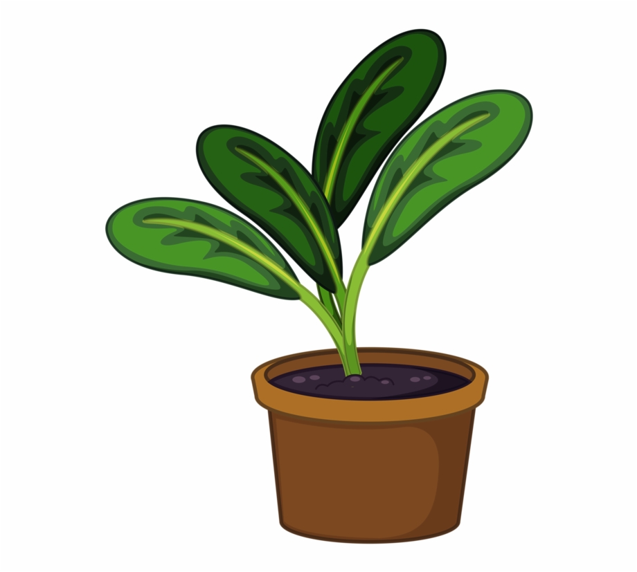 Trees to plants house. Seedling clipart potted plant