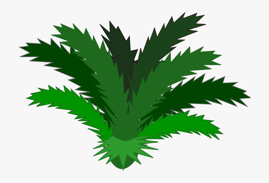 Plants clipart rainforest. Tropical single png
