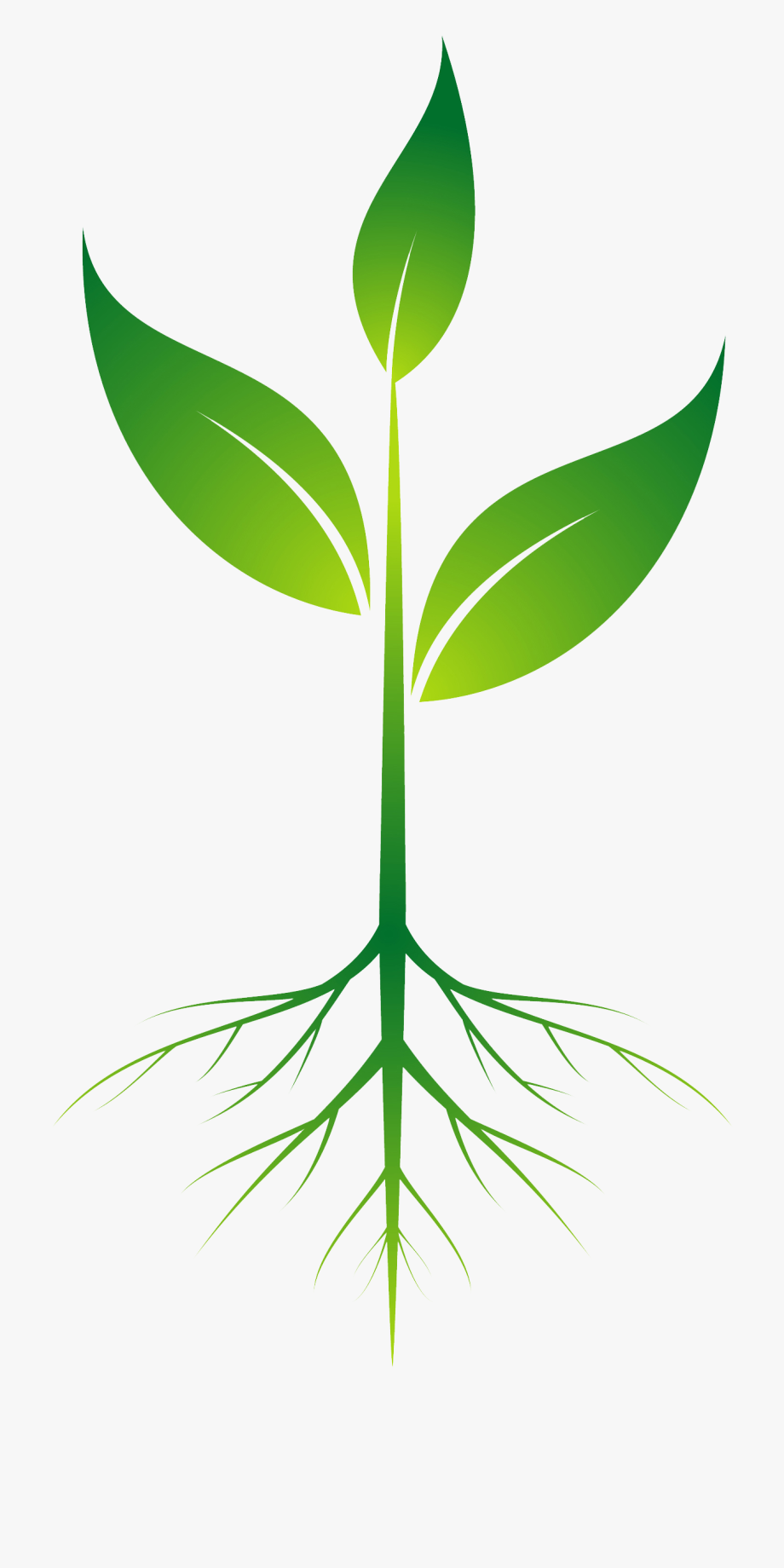 Clip art with transparent. Roots clipart plant root