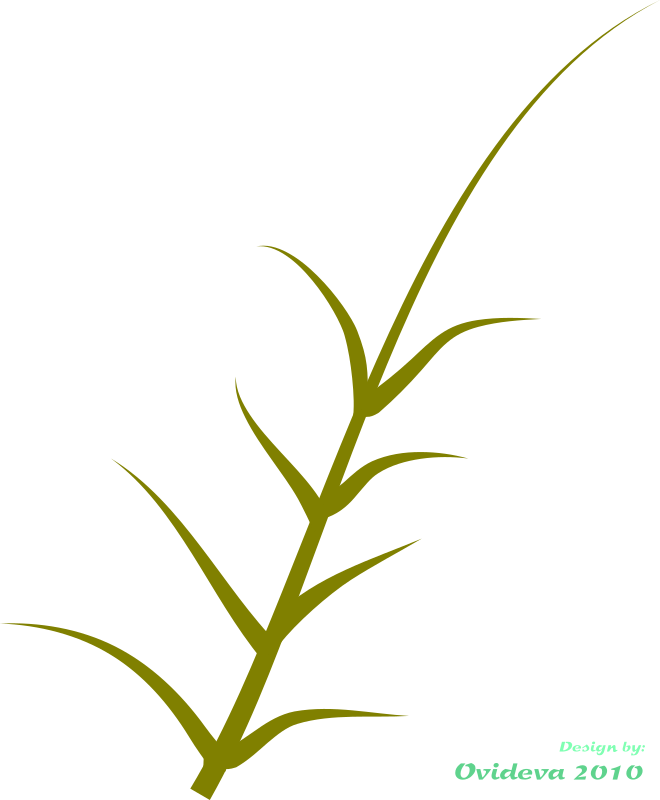 Plant clipart terrestrial plant. Green medium image png