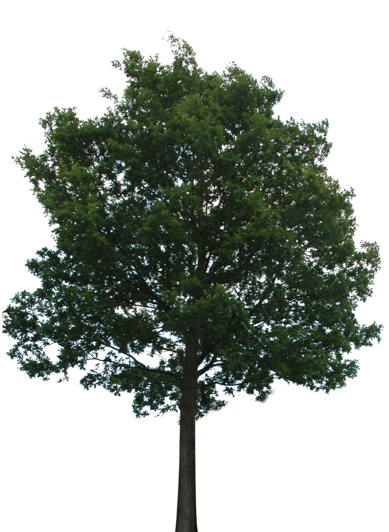 Tree with no roots. Plant clipart transparent background