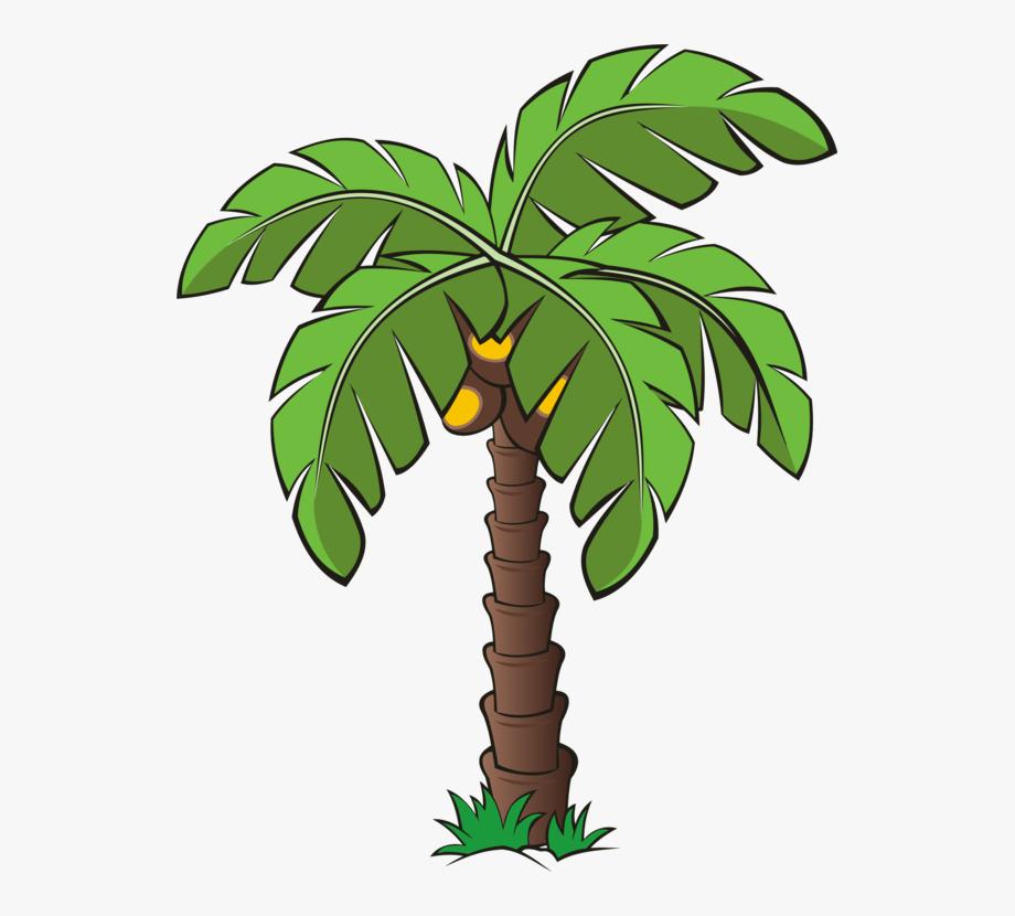 Palm trees canary island. Plant clipart tree