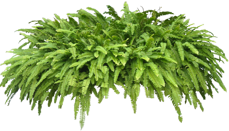 Transparent png pictures free. Plants clipart terrestrial plant
