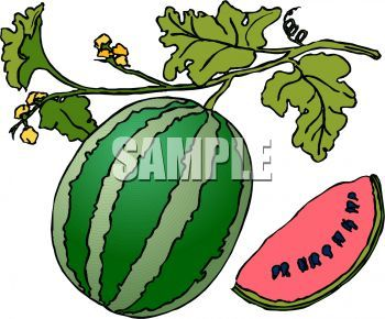 Watermelon clipart watermelon plant. Portal