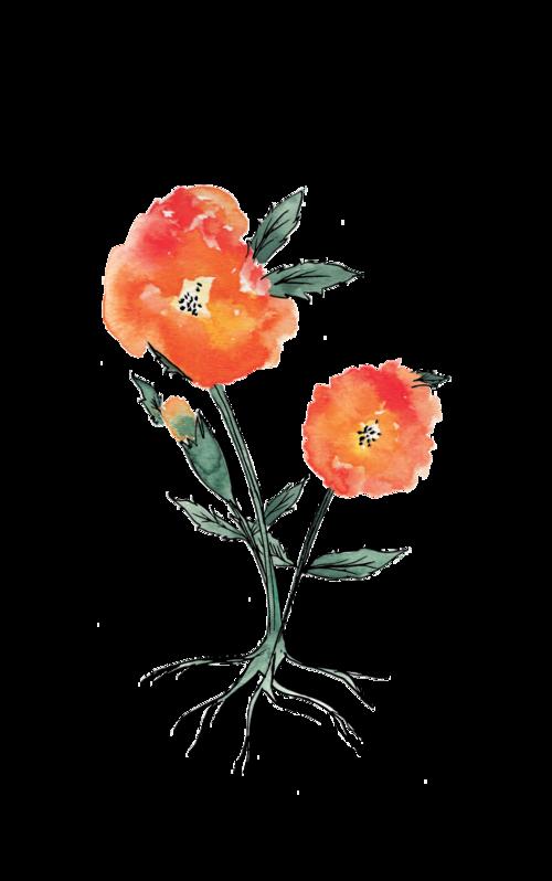 Seedling botany