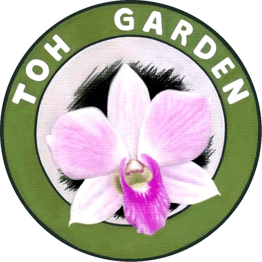 Vandaceous toh garden singapore. Planting clipart pink plant