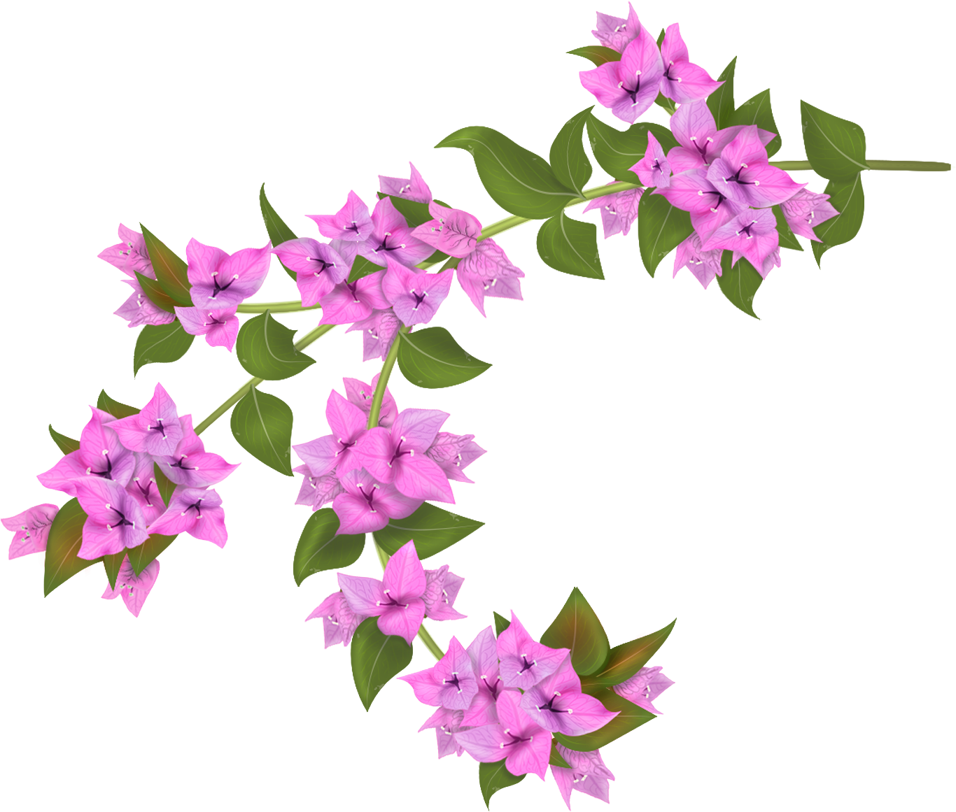 Pin by shannon c. Planting clipart pink plant