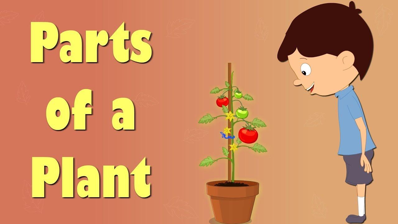 Planting clipart plant structure. Parts of a aumsum
