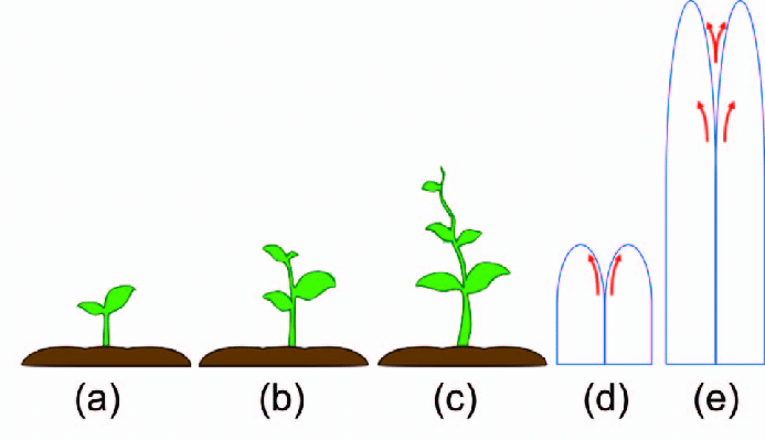 Planting clipart plant structure. Comparison of a growing