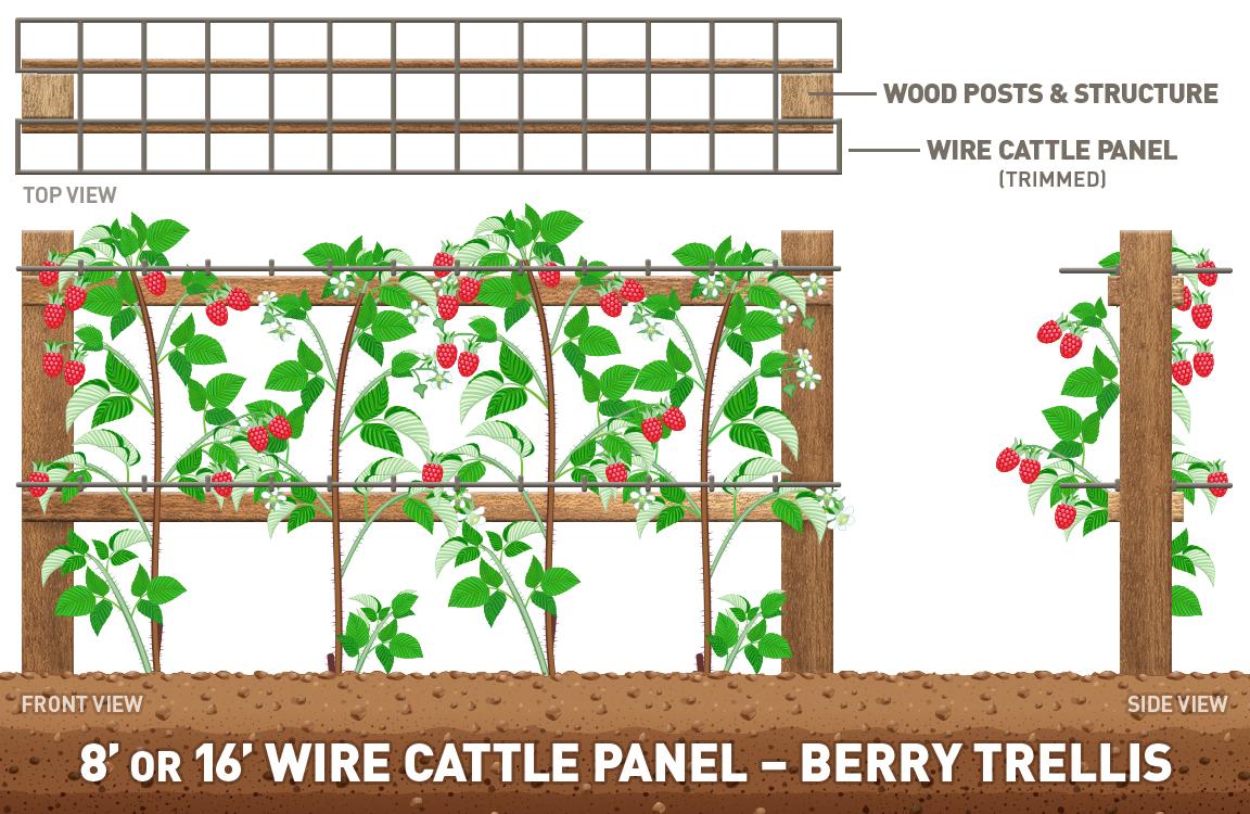 Planting clipart plant structure. Maximize your garden space