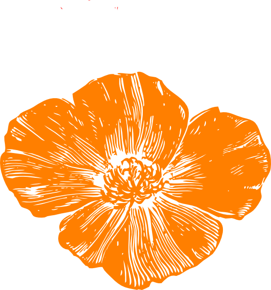 Peach poppies clip art. Poppy clipart color
