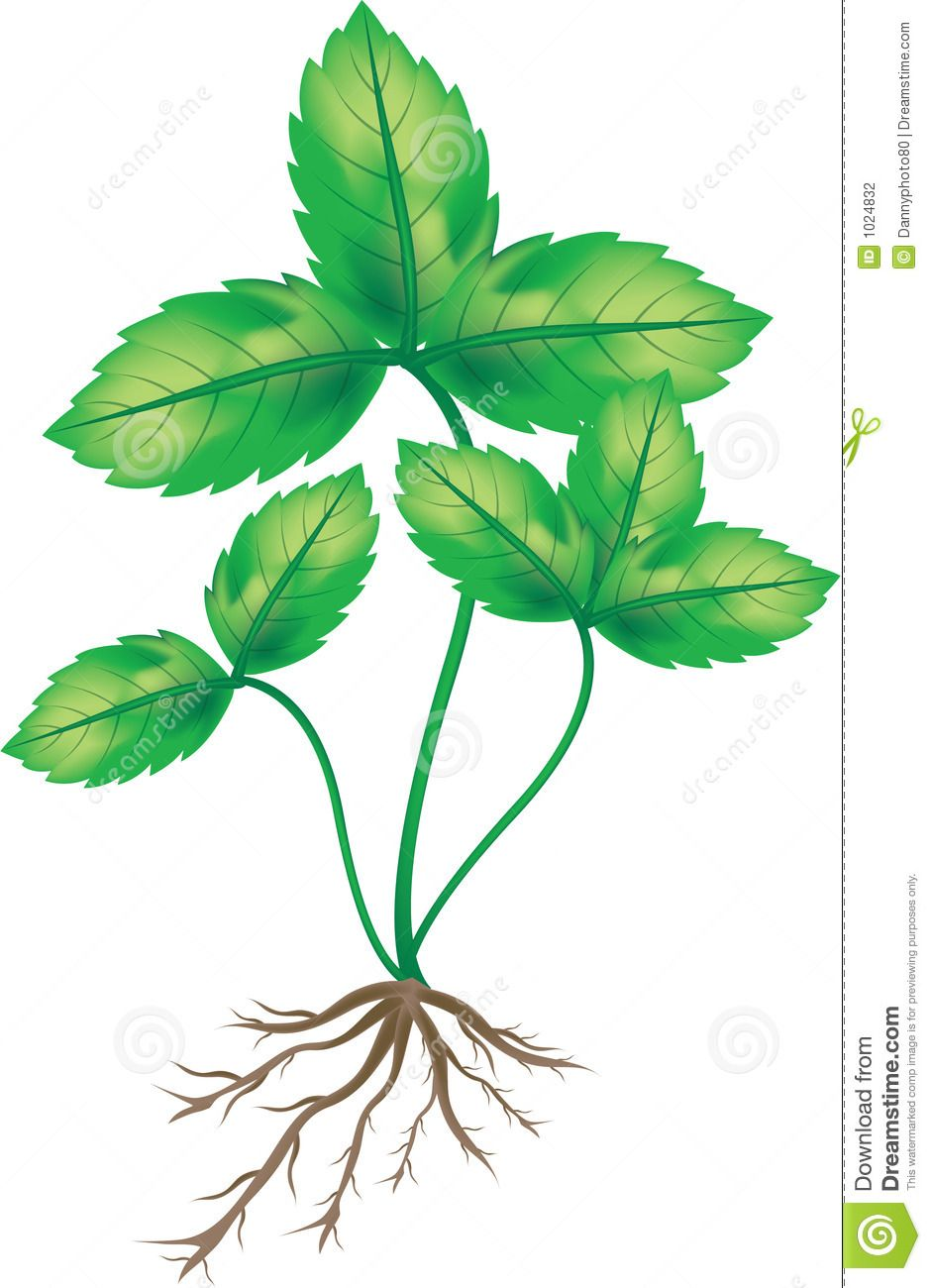 Roots clipart plant root. With clip art roo