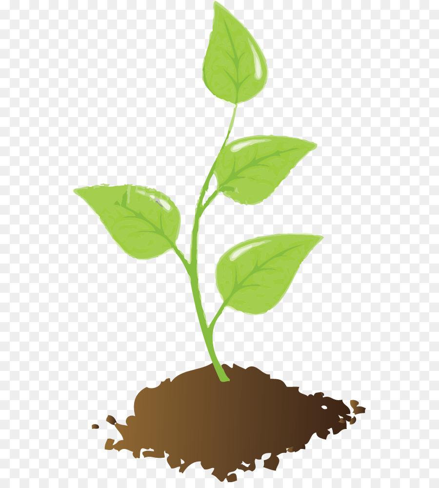 Seedling clipart leaf stem. Tree root transparent clip