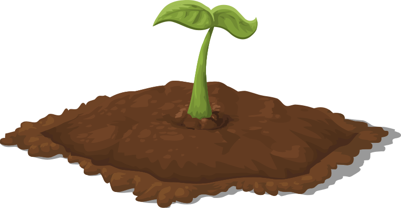 seedling clipart germination process