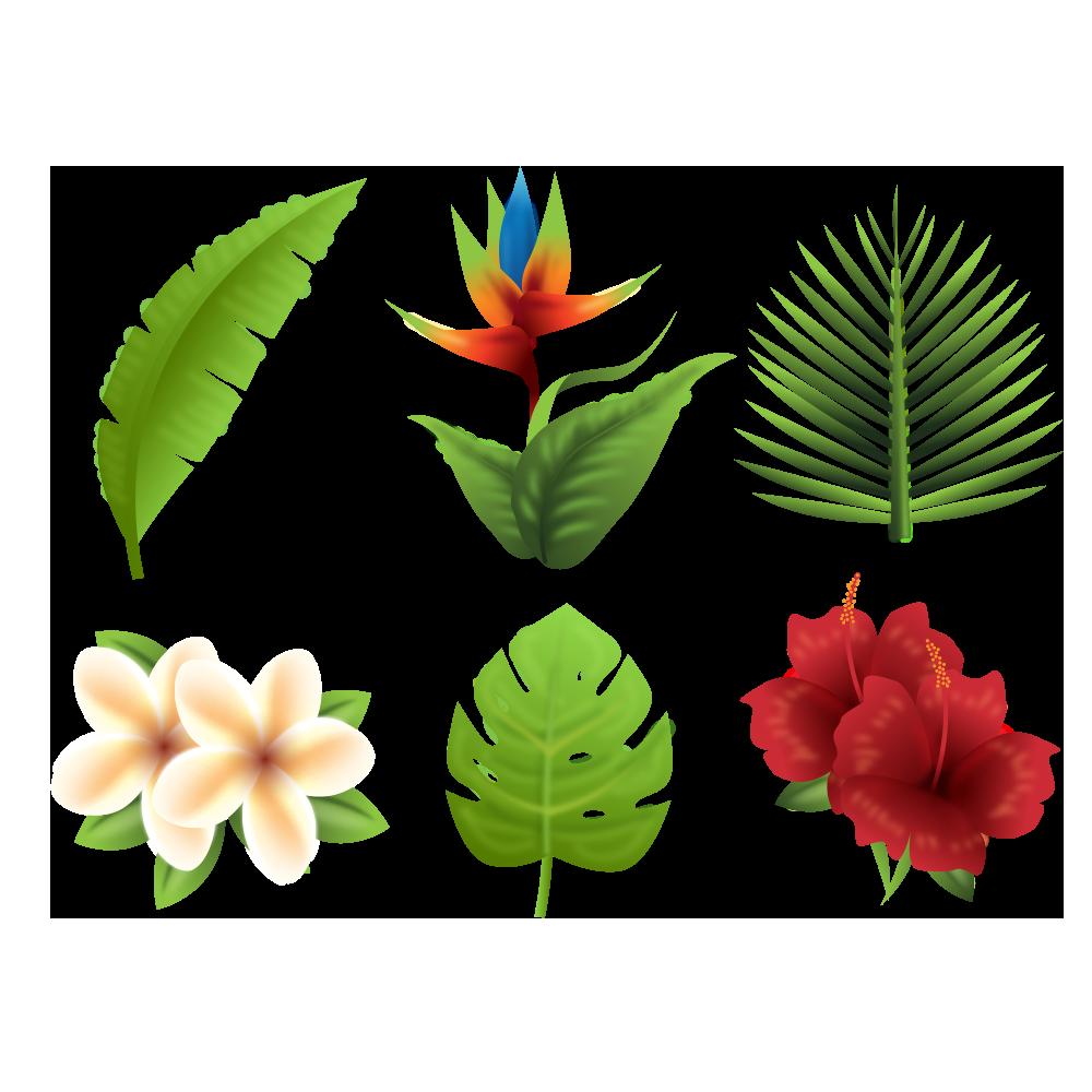 Plants clipart terrestrial plant. Flower tropical transprent png