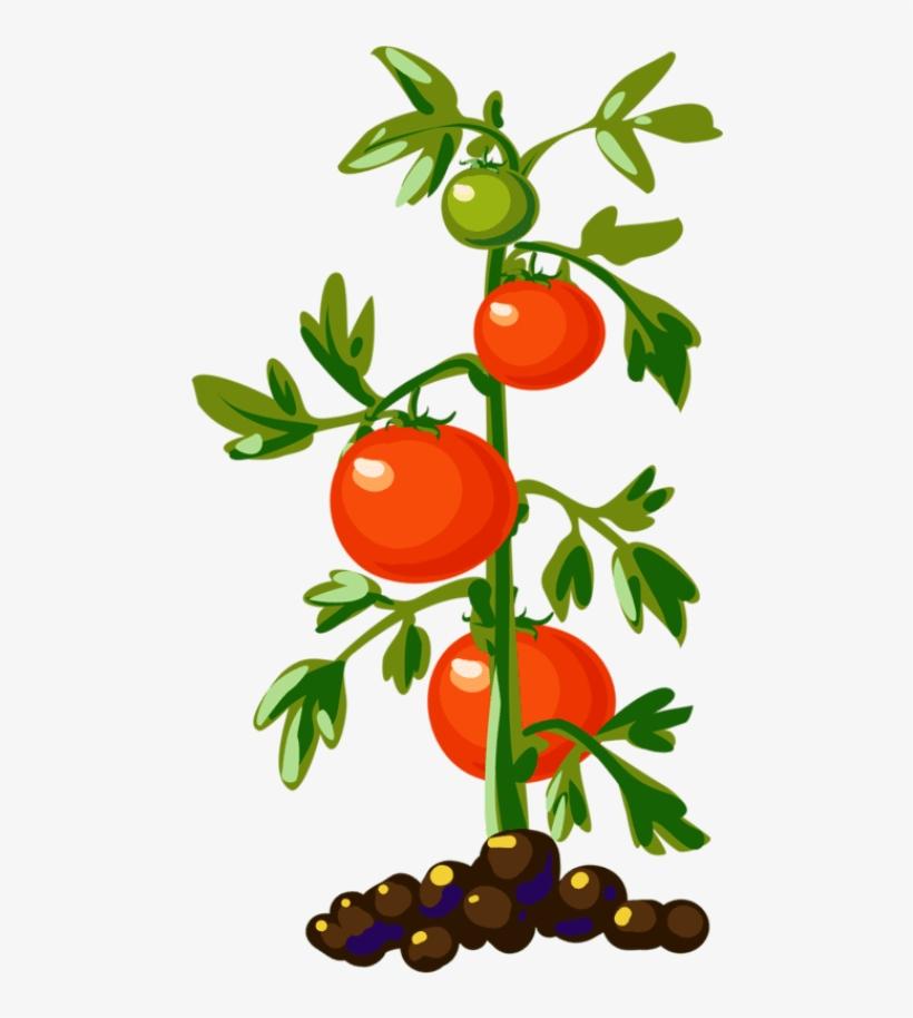 Plant plants tree food. Tomatoes clipart tomato leaf