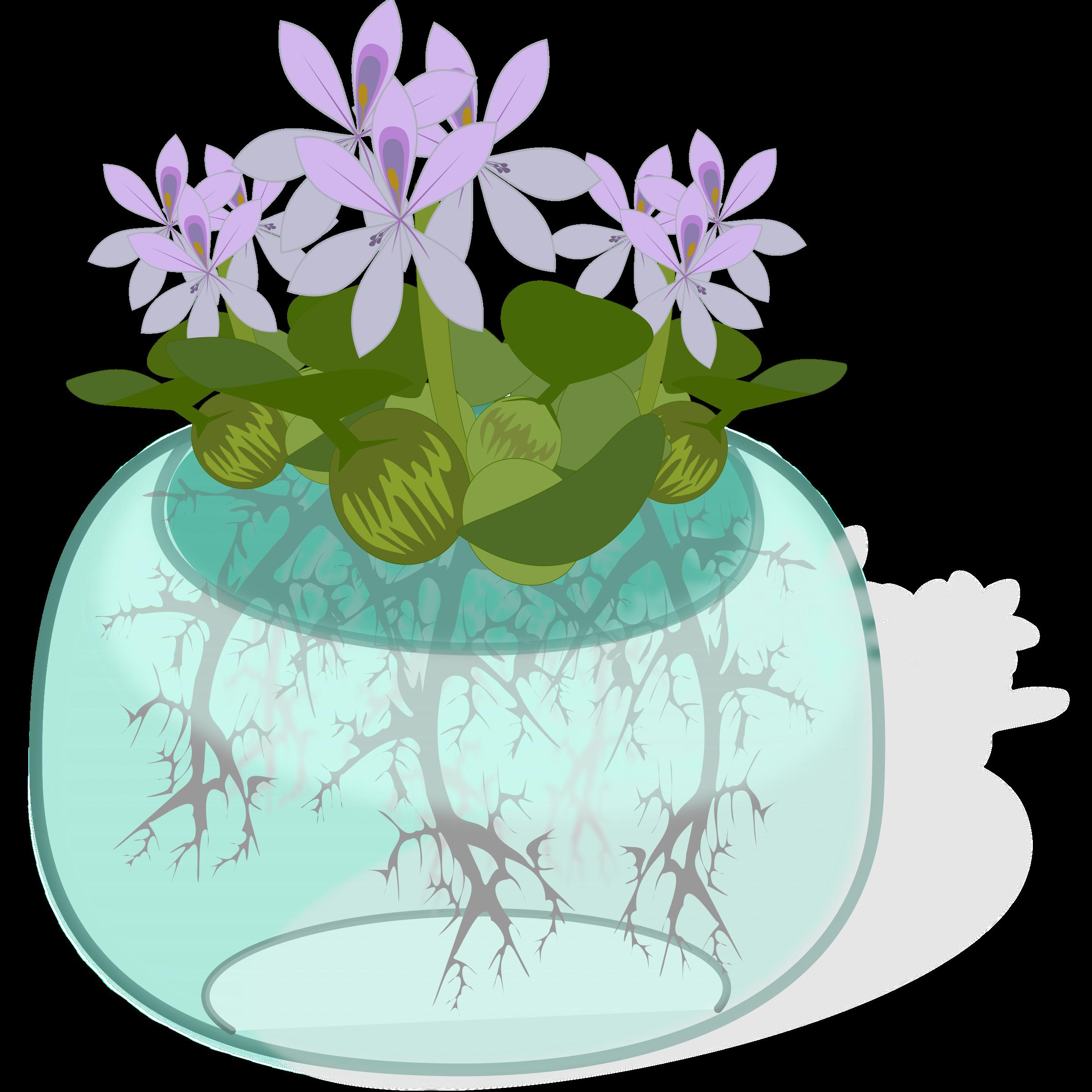 Water plant big image. Planting clipart violet