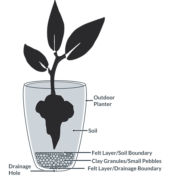 Planting clipart water plant. The complete guide to