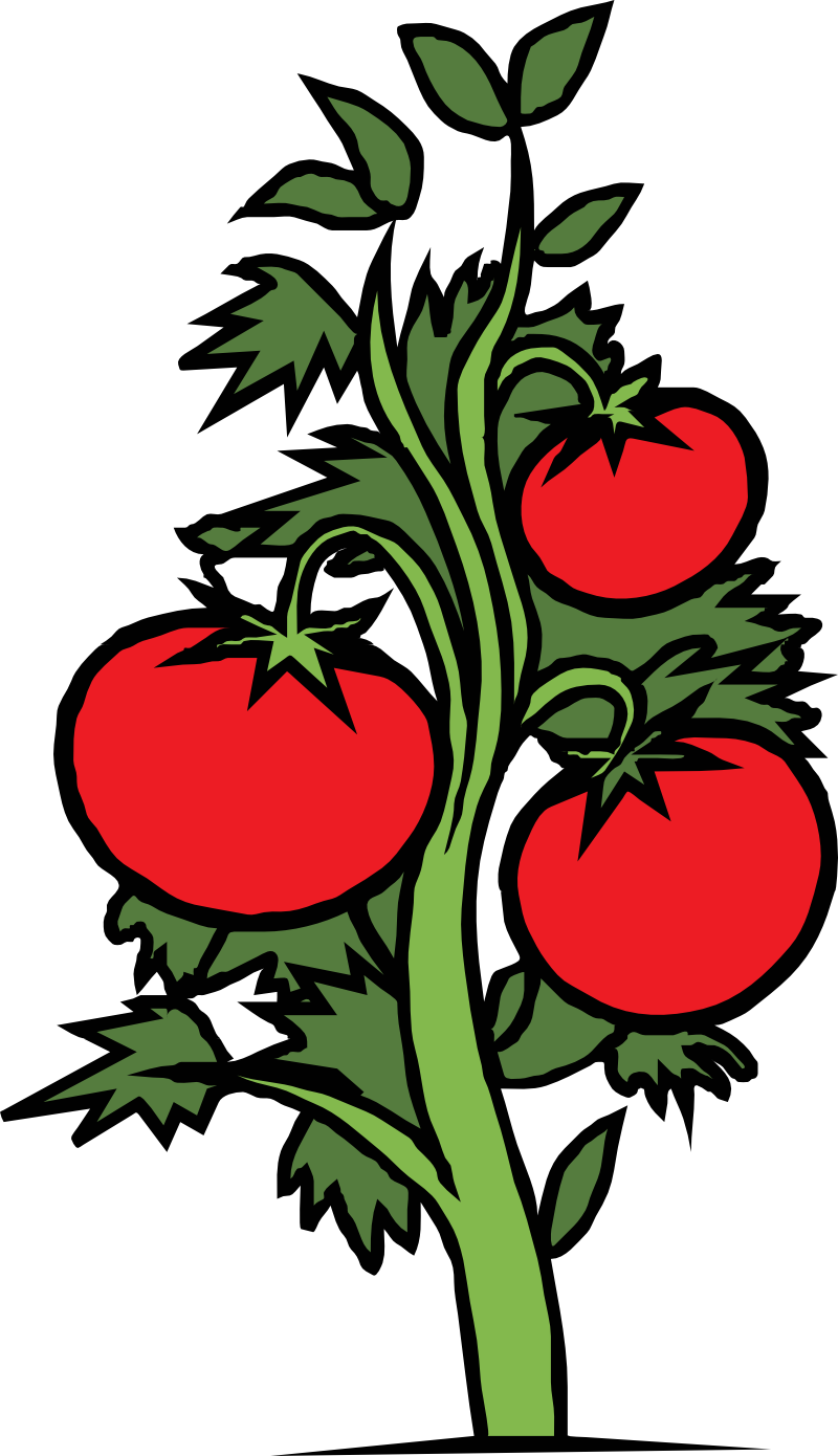 Plants clip art free. Tomatoes clipart tomato crop