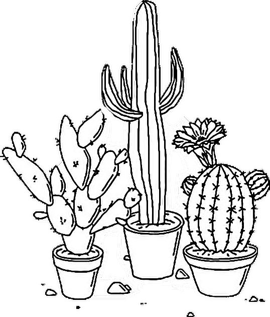 Succulent Drawing Clip Art