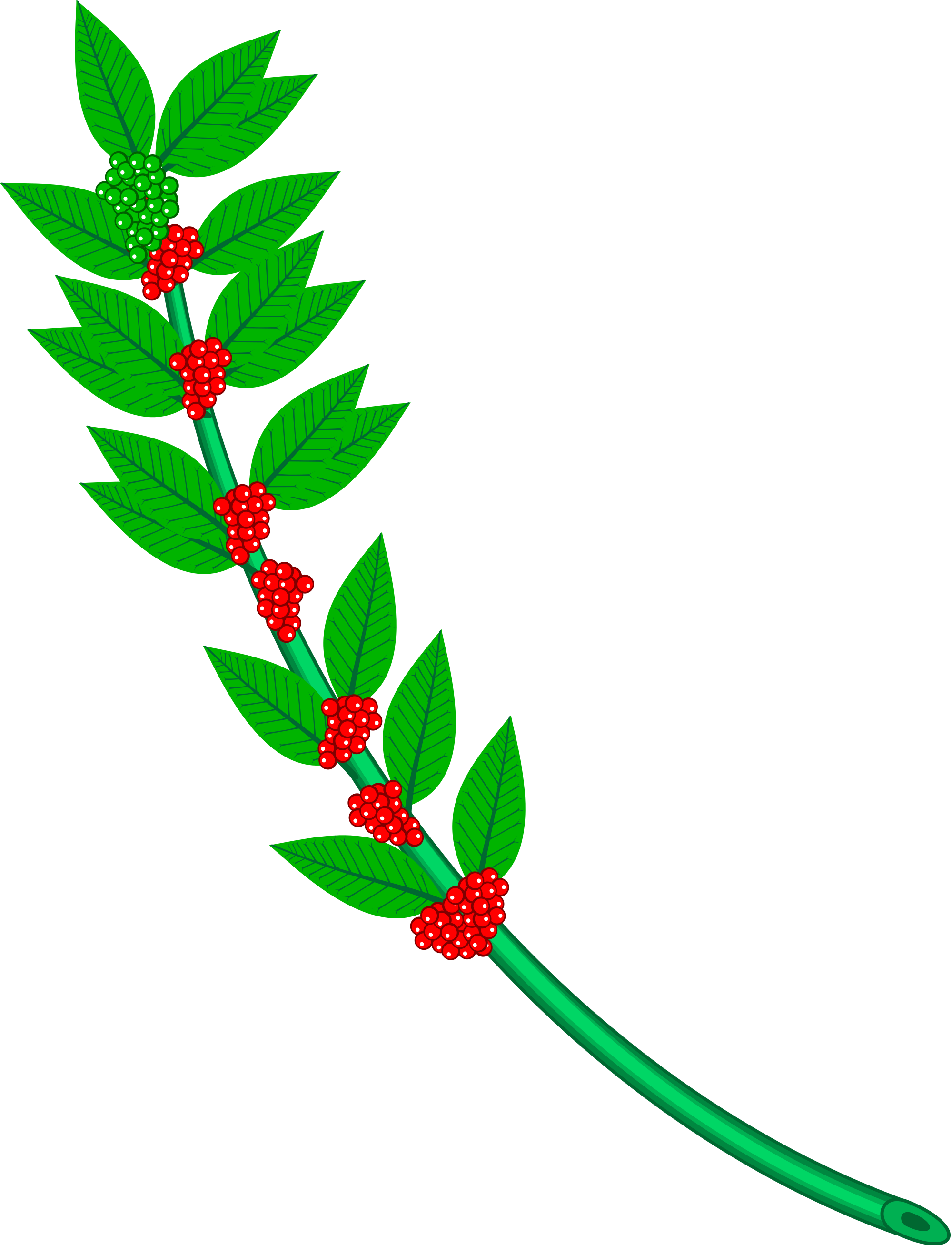 Plants clipart coffee tree. File heraldic branch svg