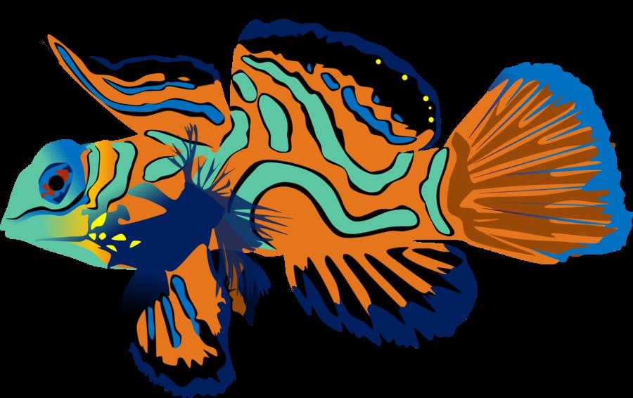 Mandarin fish by adamzt. Tuna clipart remora