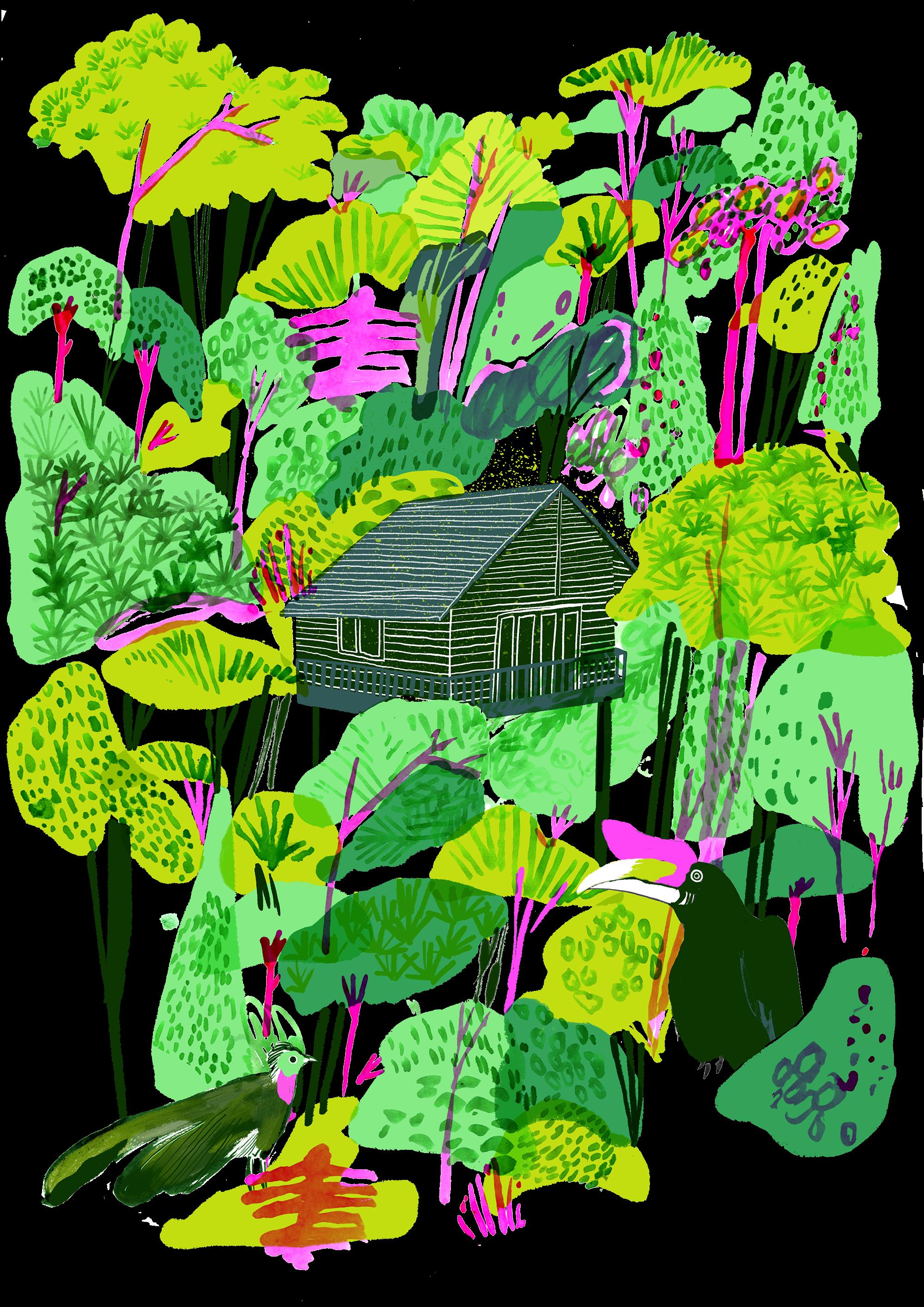 Borneo www hannahwarren com. Plants clipart rainforest