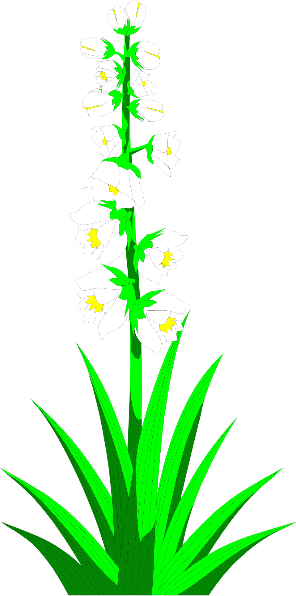 Yucca flowers free stock. Plants clipart terrestrial plant
