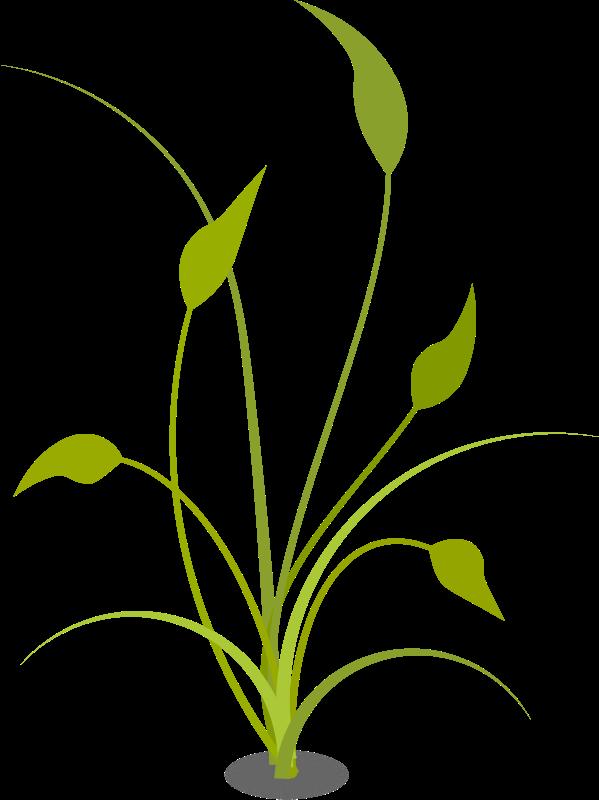 Plants clipart terrestrial plant. Floral medium image png