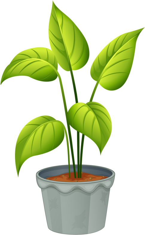 Plants clipart terrestrial plant. Green home flowering and
