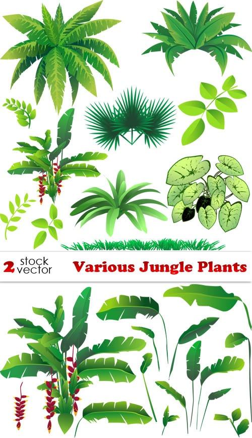 Free shrub bushes download. Plants clipart terrestrial plant