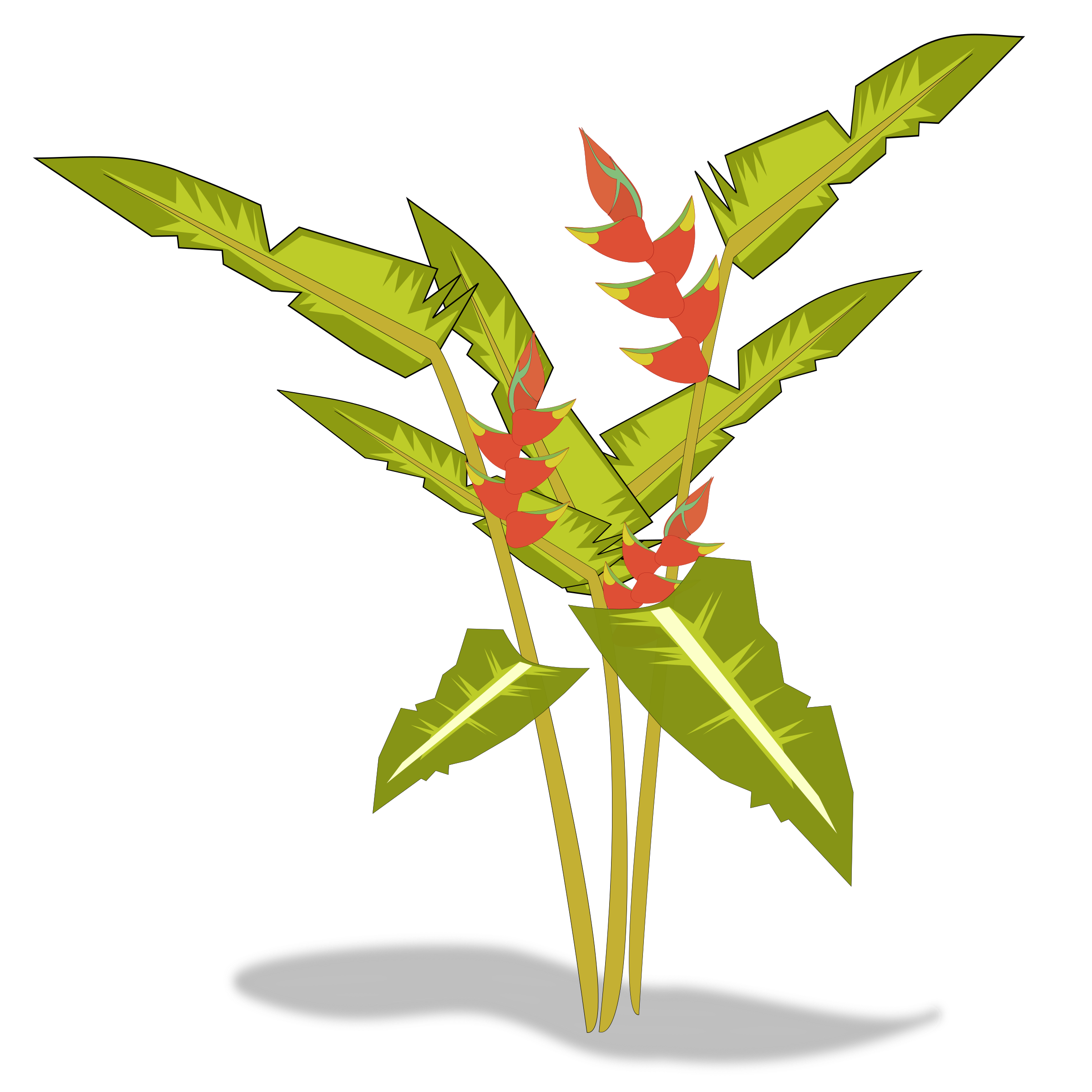 Heliconia big image png. Plants clipart terrestrial plant
