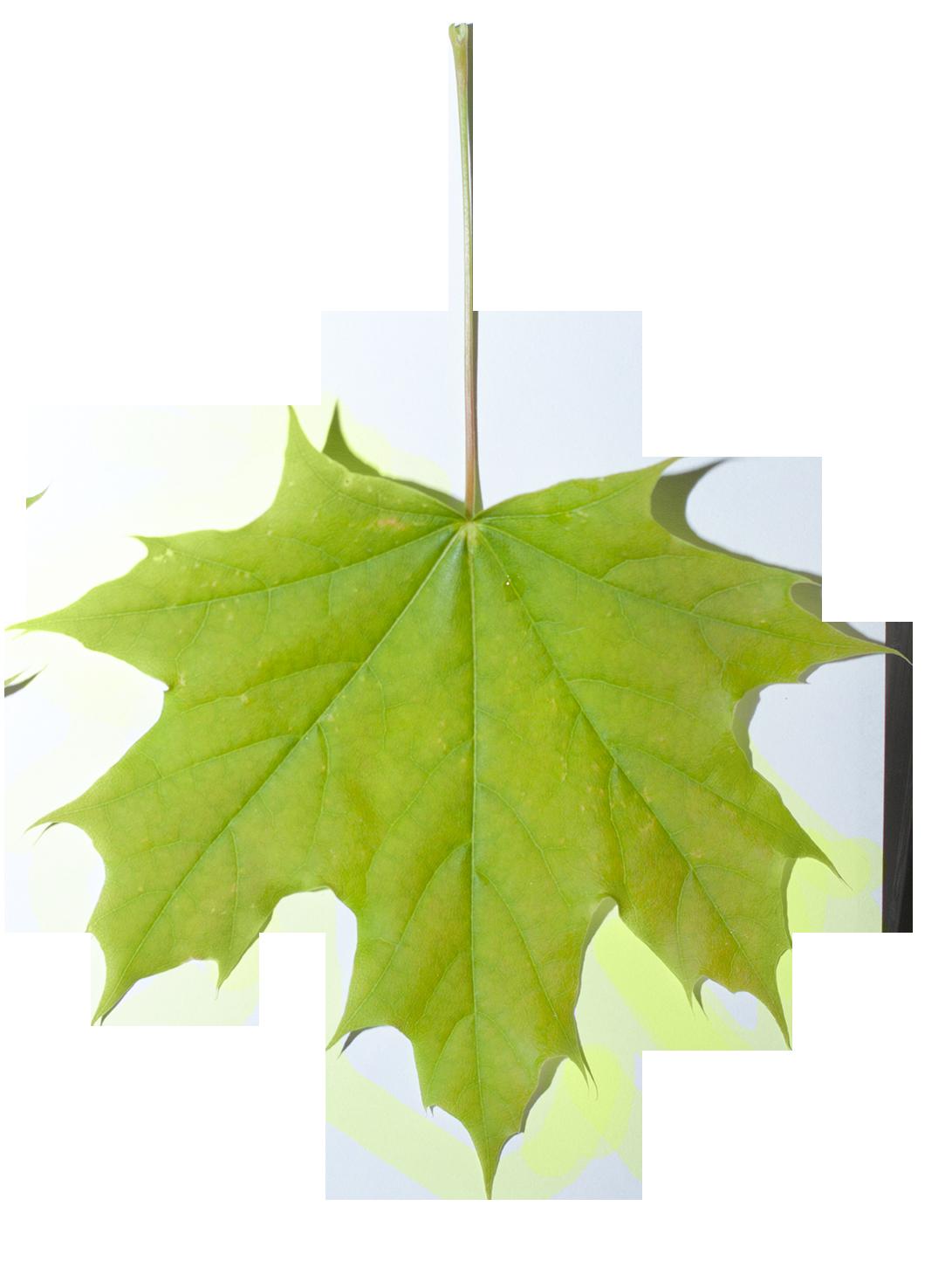 Plants clipart vegetation. Paramecij s base texture