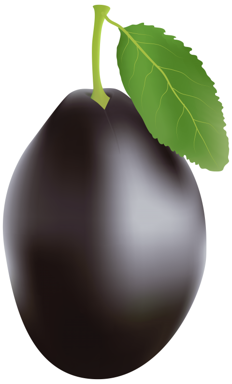 Plum clipart one. Png free images toppng