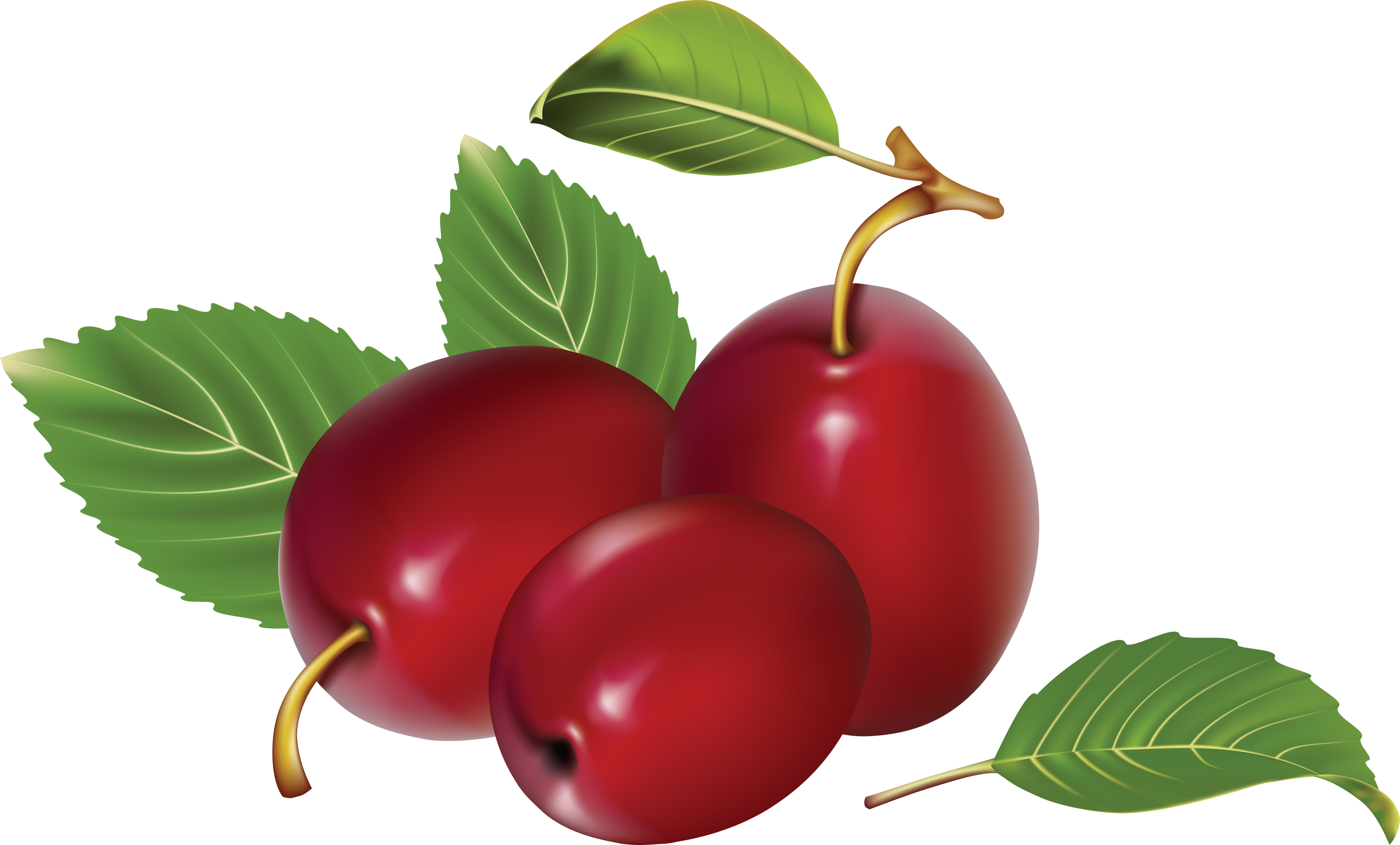 Png images free download. Plum clipart one