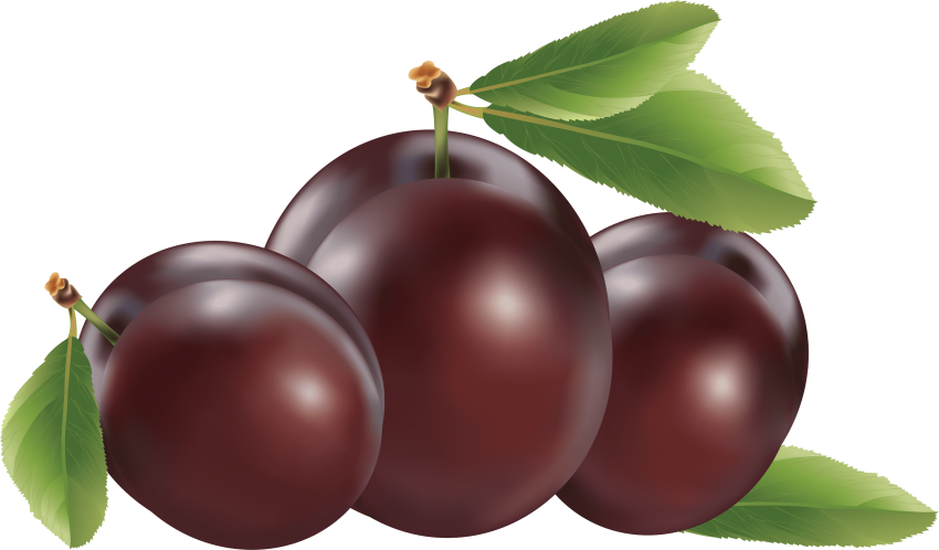 Png free images toppng. Plum clipart one