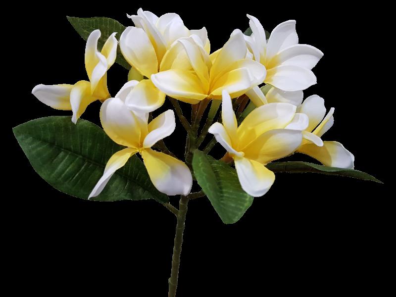 Plumeria flower png.  cm spray silk