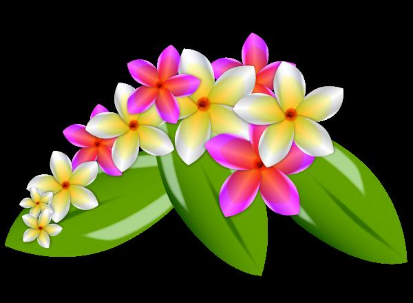 Flowers vector plant. Plumeria flower png