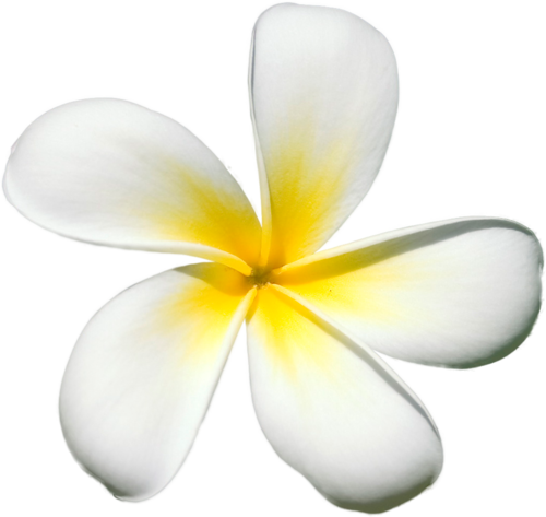 Plumeria flower png. Exotic flowers stickers pinterest