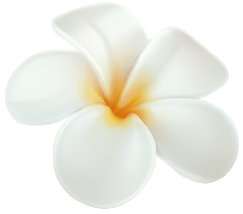 Plumeria flower png. Clip art hawaiian flowers