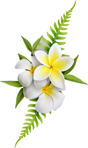 Exotic flowers transfer decoupage. Plumeria flower png