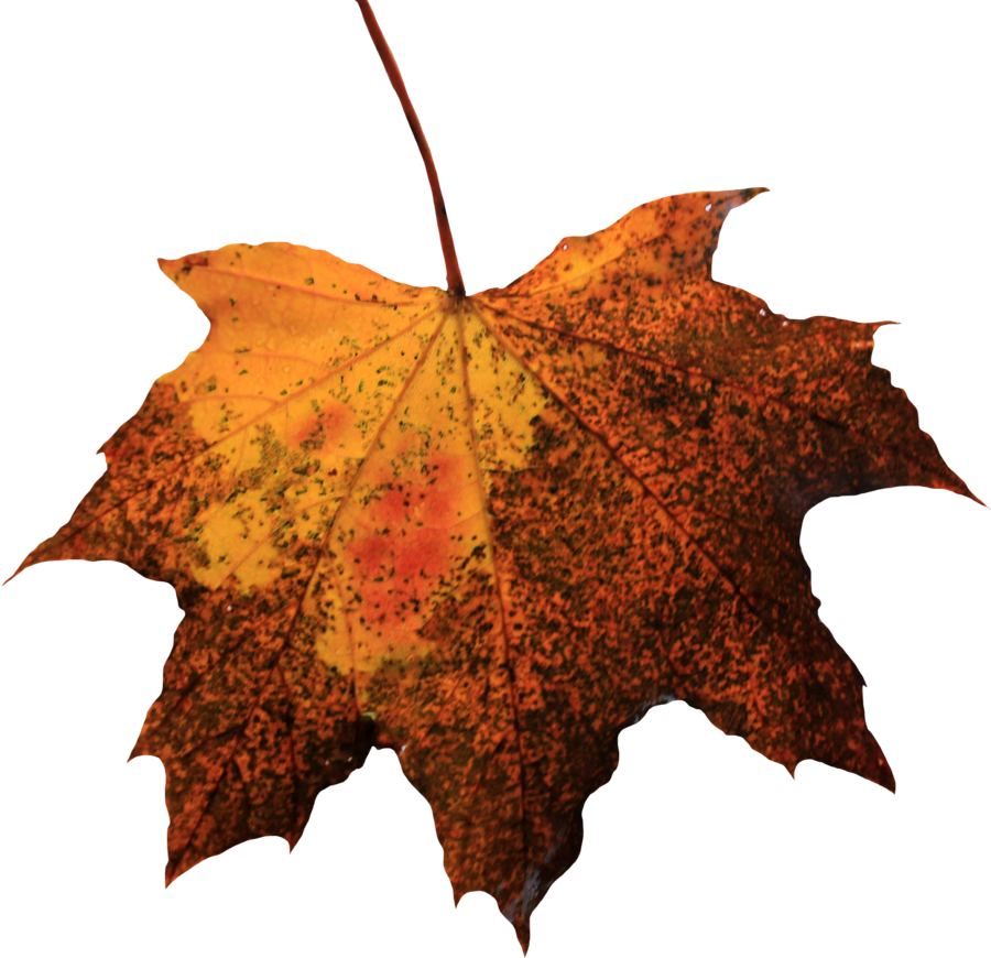 Leaf by thy darkest. Png files for photoshop