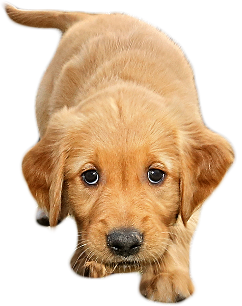 Special puppy images jwpictures. Png files with transparent background