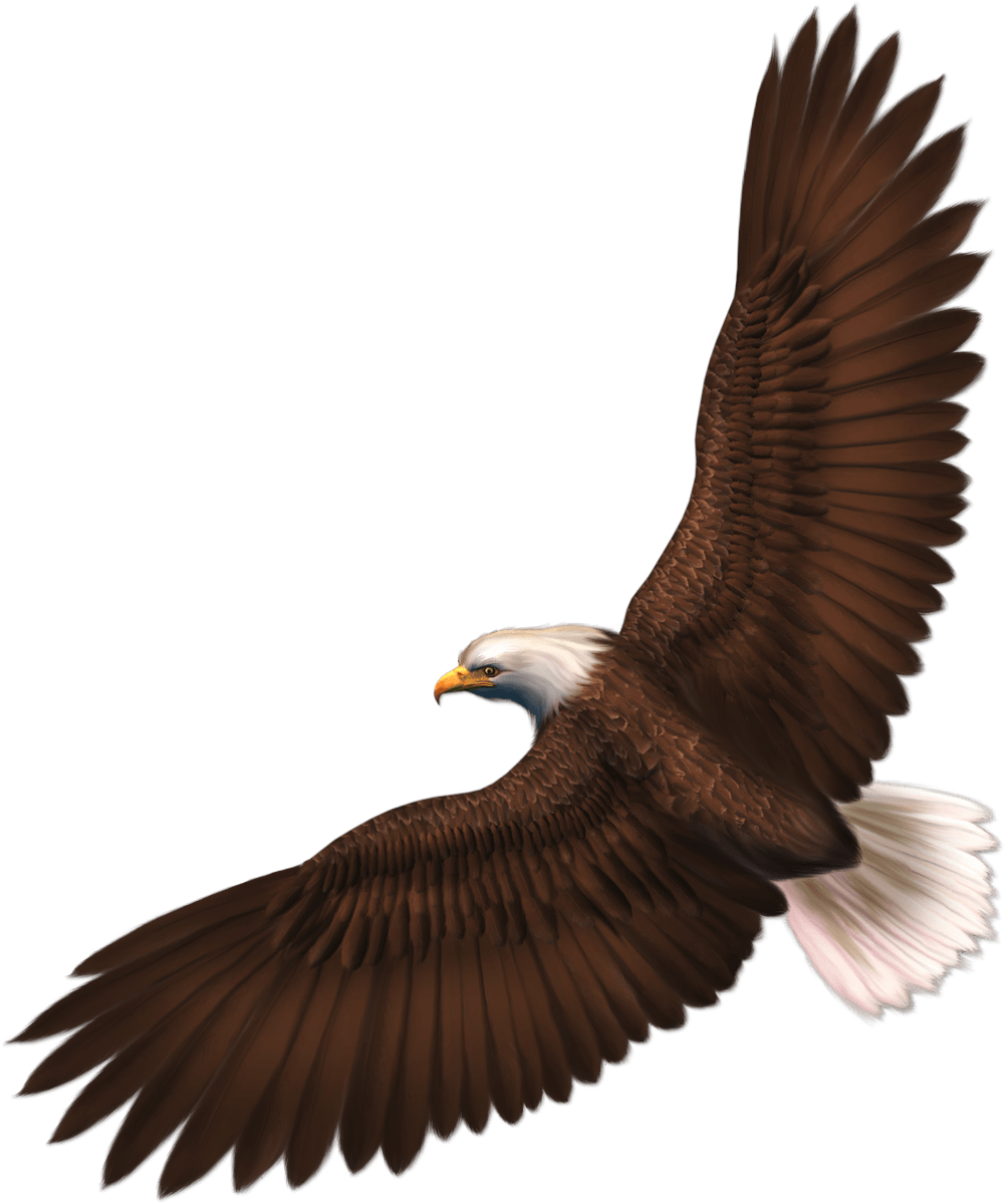 Png images download. Eagle image with transparency