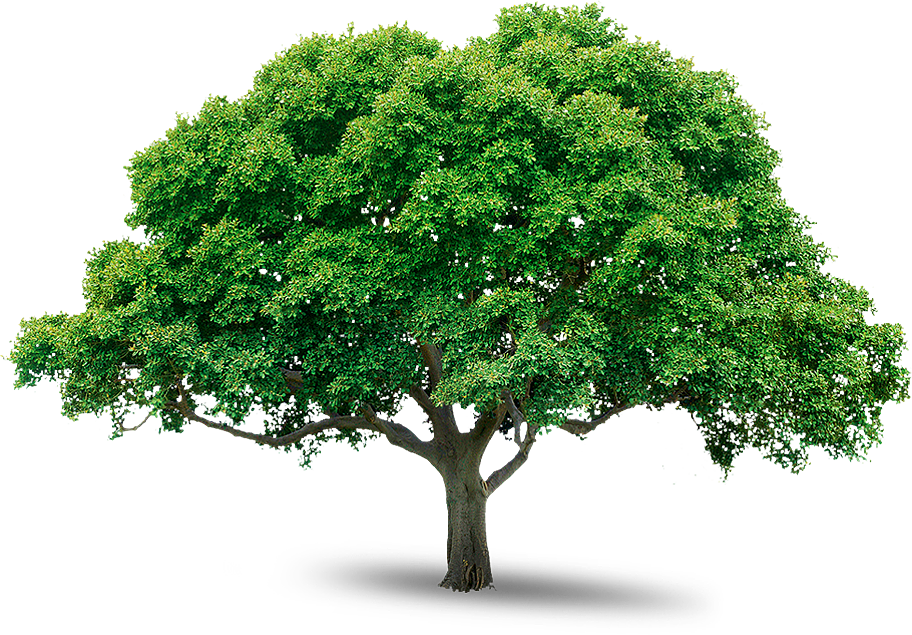 Png images free. Tree icons and backgrounds