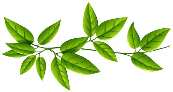 Png images free. Green leaves image gallery
