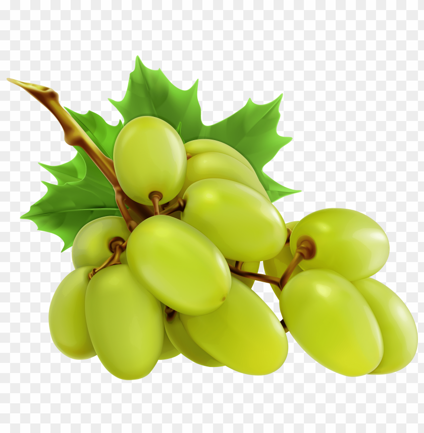 White grapes toppng transparent. Png images free