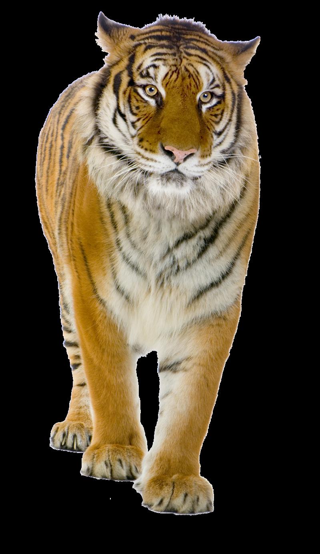 Real animal pluspng pluspngcom. Png transparent images